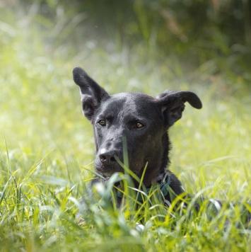 Шон - Собаки в добрые руки