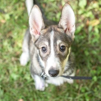 Пипа - Собаки в добрые руки