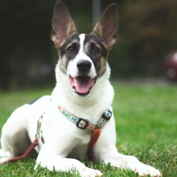 Рори - Собаки в добрые руки