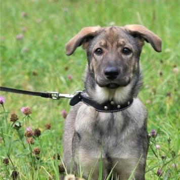 Фаня - Собаки в добрые руки