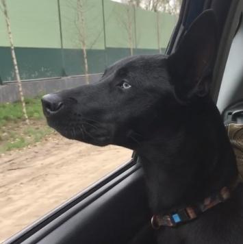 Хеля - Собаки в добрые руки