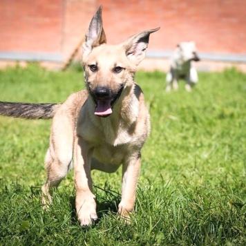 Чами - Собаки в добрые руки