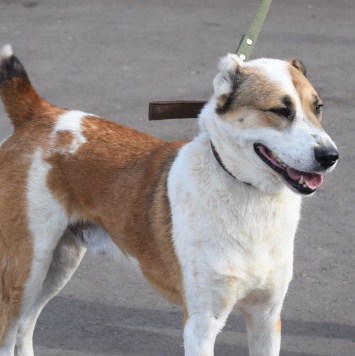 Рой - Собаки в добрые руки