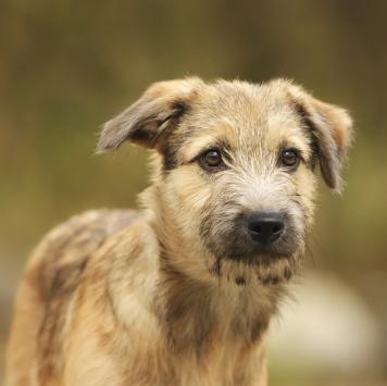 Симпотка - Собаки в добрые руки
