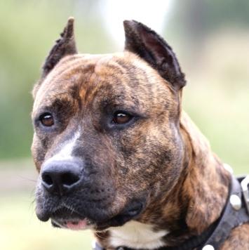 Бартуша - Собаки в добрые руки