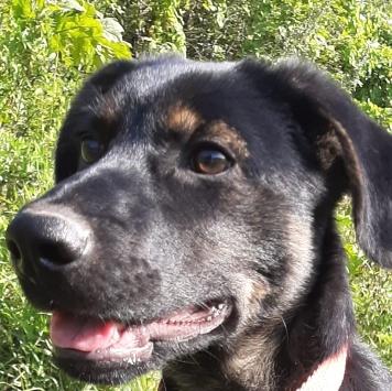 Joy (Джой) - Собаки в добрые руки