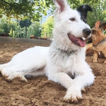 Леди - Собаки в добрые руки