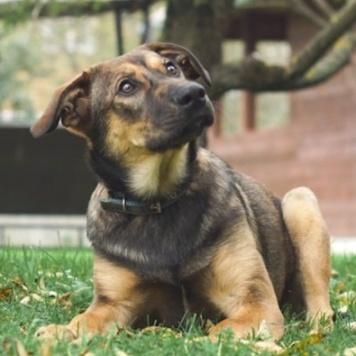 Греф - Собаки в добрые руки