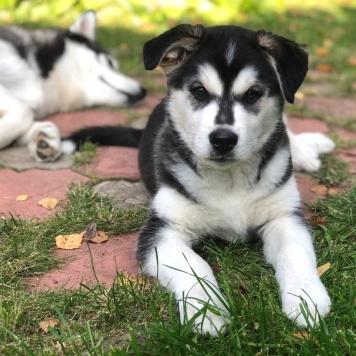 Гари - Собаки в добрые руки