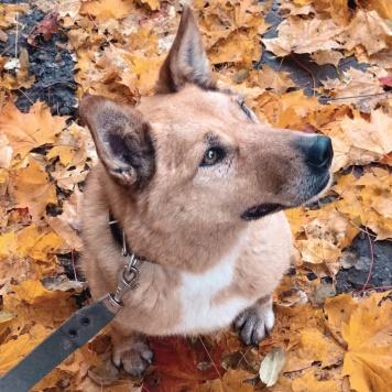 Тина - Собаки в добрые руки