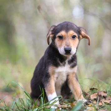 Лина - Собаки в добрые руки