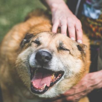 Боцман - Собаки в добрые руки