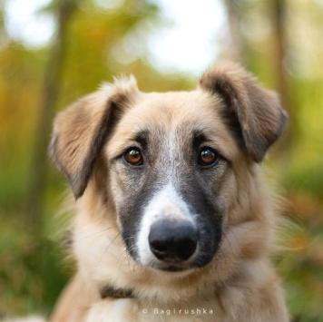 Жульенка - Собаки в добрые руки