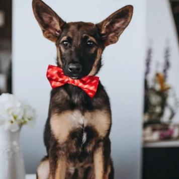 Китти - Собаки в добрые руки