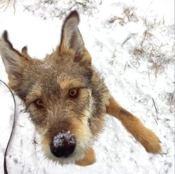 Орфей - Собаки в добрые руки