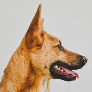 Ромул - Собаки в добрые руки