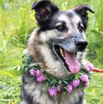 Поло - Собаки в добрые руки