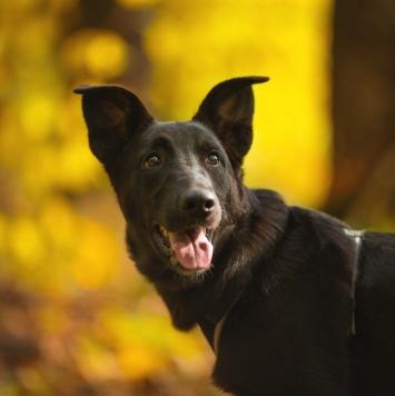 Орео - Собаки в добрые руки