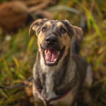 Бонди - Собаки в добрые руки