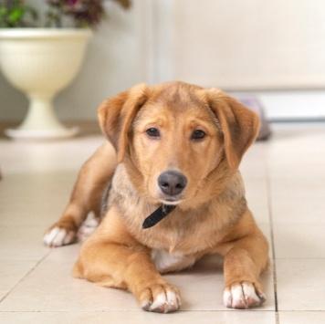 Лапушка - Собаки в добрые руки