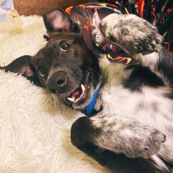 Мякиш - Собаки в добрые руки