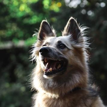 Лада - Собаки в добрые руки