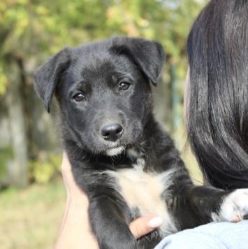 Эмма - Собаки в добрые руки