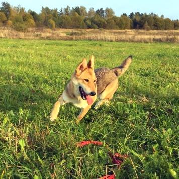 Эллис - Собаки в добрые руки