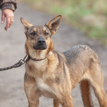 Илья - Собаки в добрые руки