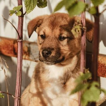 Дива-чудо девчонка - Собаки в добрые руки
