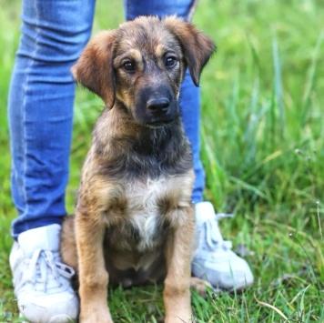 Эстер - Собаки в добрые руки