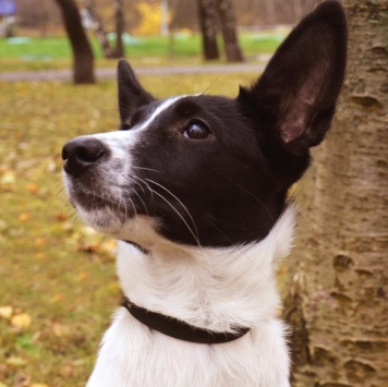 Лика - Собаки в добрые руки