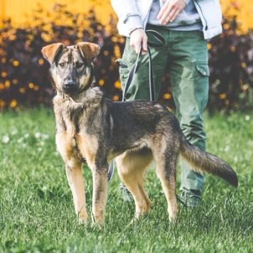 Малинка - Собаки в добрые руки
