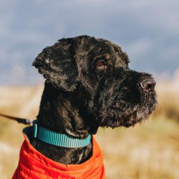 Ермолай - Собаки в добрые руки