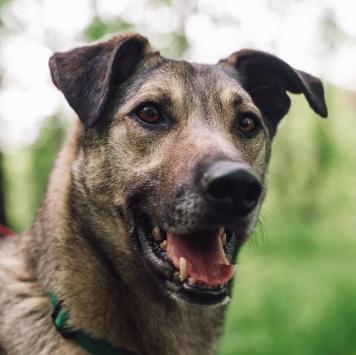 Флинт - Собаки в добрые руки