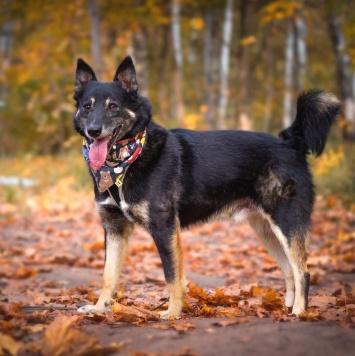 Фиксик - Собаки в добрые руки