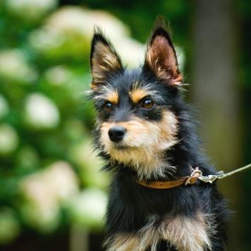 Гордон - Собаки в добрые руки