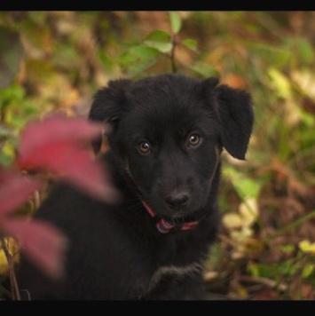 Айя - Собаки в добрые руки