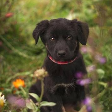 Бусинка - Собаки в добрые руки