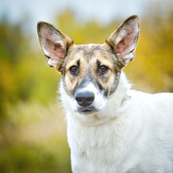 Луиза - Собаки в добрые руки