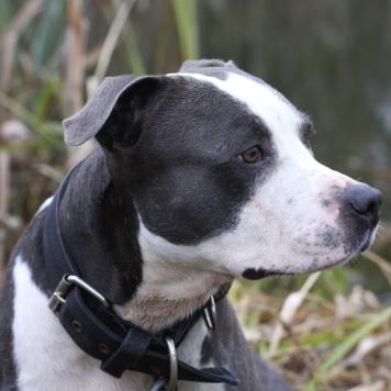 Чезар - Собаки в добрые руки