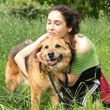 Абраша - Собаки в добрые руки