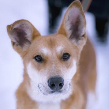 Кабачок - Собаки в добрые руки