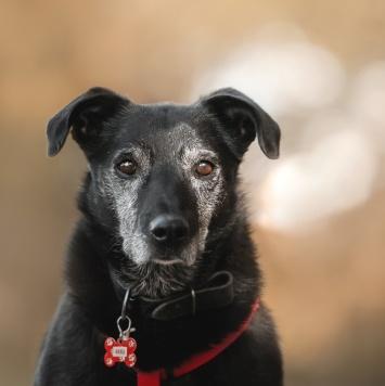 Баба Нина - Собаки в добрые руки