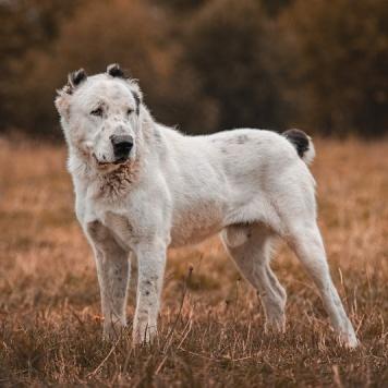 Фрай - Собаки в добрые руки