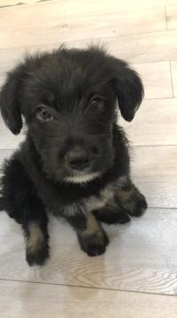Булка - Собаки в добрые руки