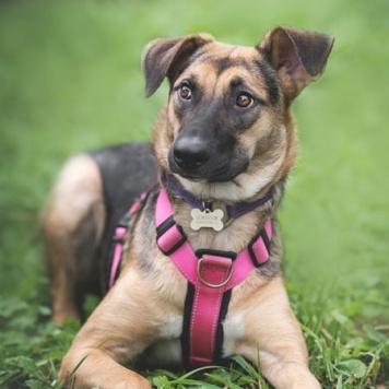 Шайни - Собаки в добрые руки