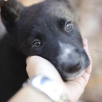 Черроки - Собаки в добрые руки