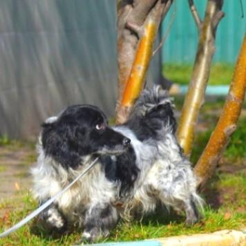 Сеня - Собаки в добрые руки