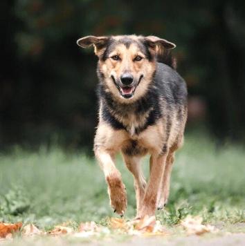 Тэсс - Собаки в добрые руки